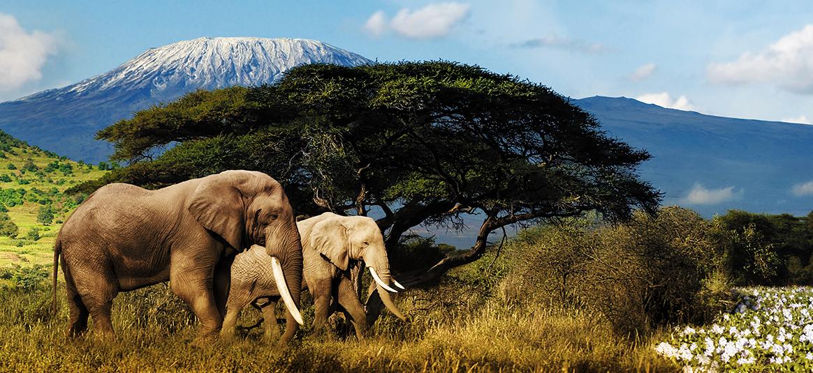 SlideShow_1604_Afrique